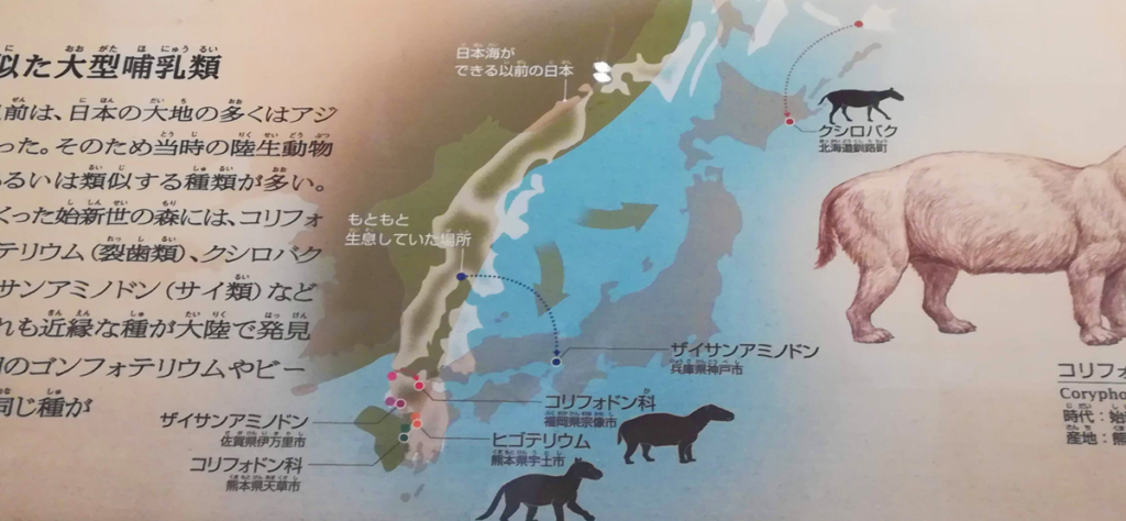 国立科学博物館で撮影した展示物です。日本海ができる以前の日本が写っています。 日本海が出来る前、日本列島はユーラシア大陸の沿岸部でした。それが次第に移動し、 今の日本になりました。移動は2方向に。 西日本を乗せたアムールプレートが南に(:下向きの↓)、 東日本を乗せたオホーツクプレートが東(:右向きの→)に移動。結果的に南東へ移動した様子がわかります。 矢嶋ストーリーのブログ「矢嶋ストーリー's news」の「『日本沈没』で地球に目覚める」の 文中に出てくる写真です。